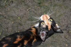 L'un des chats de Don Perdo