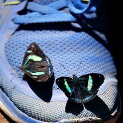 Les papillons aiment les couleurs