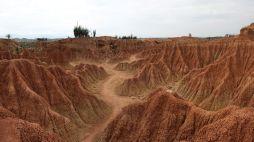 Sentier dans le désert rouge