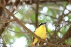 Un oiseau jaune, on ne l'a pas encore identifié