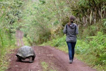 En chemin avec la tortue géante
