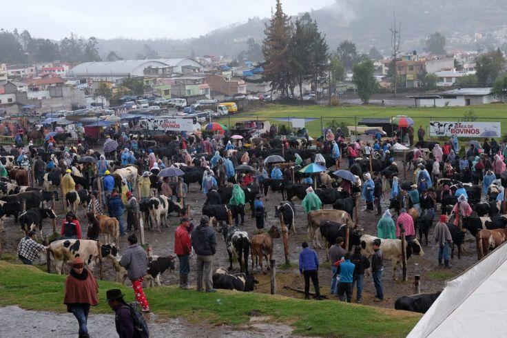 Marché aux bestiaux d'Otavalo