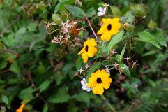 Fleur à Baños