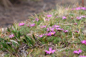 Fleurs dans le parc Cajas