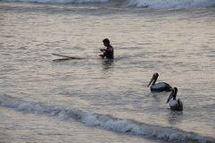 Surfeur et pélicans à Huanchaco