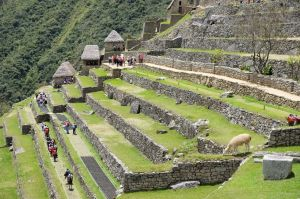 Les terrasses incas du Machu Picchu