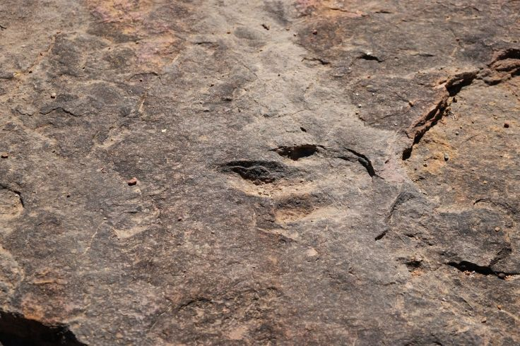 Traces de prétrodactyle, Torotoro, Bolivie